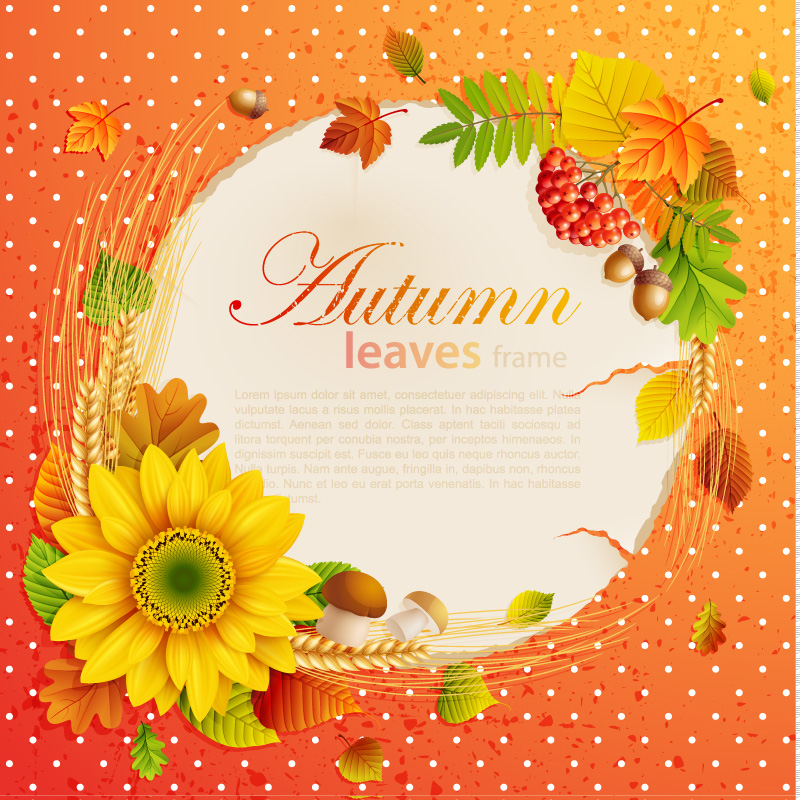 Background Beautiful autumn leaves vector