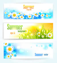 Beautiful Colorful Flowers Banner1