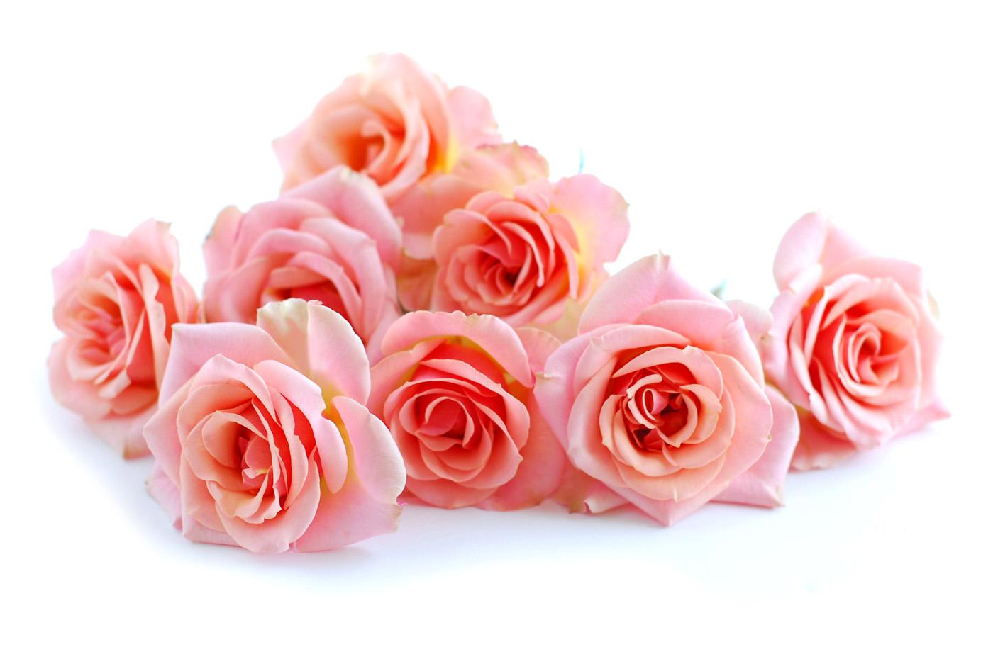 Chalk Rose