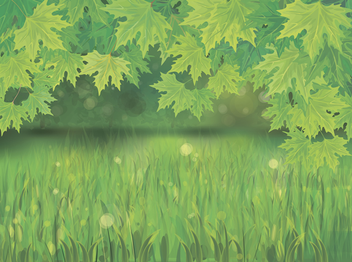 Green Leaf and Grass