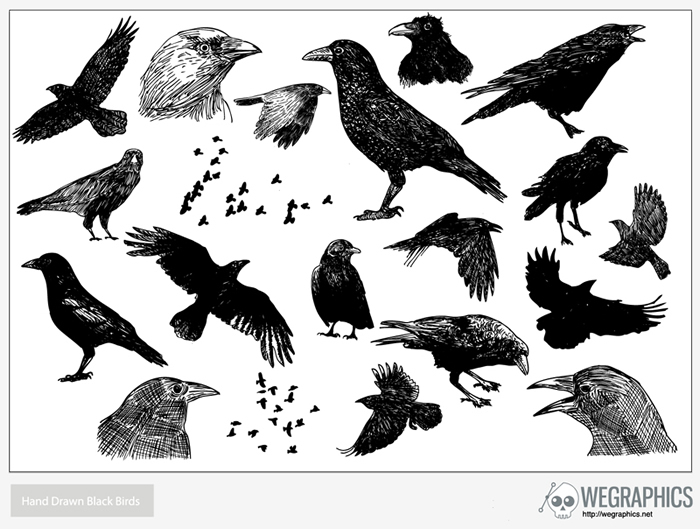 Hand Drawn Black Birds