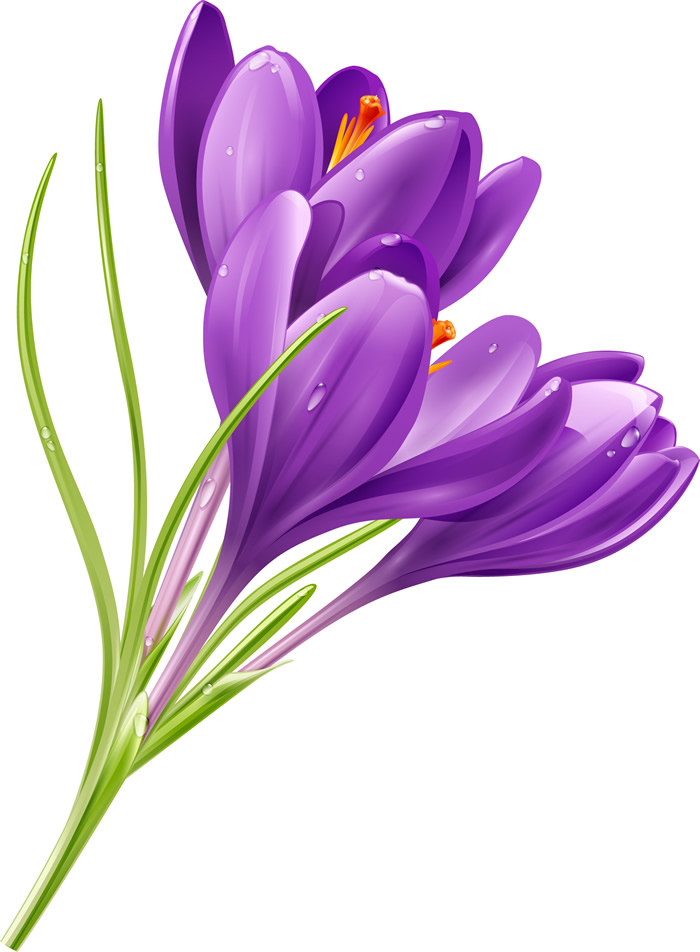 purple flowers  free vector graphic download, Beautiful flower