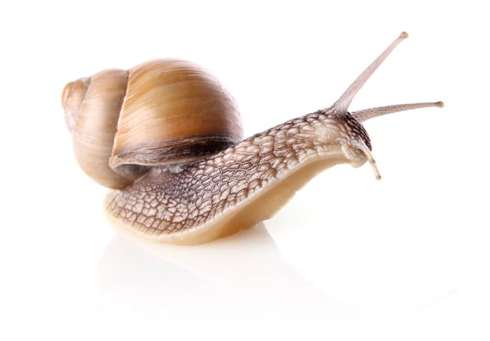 Snail HD PIC