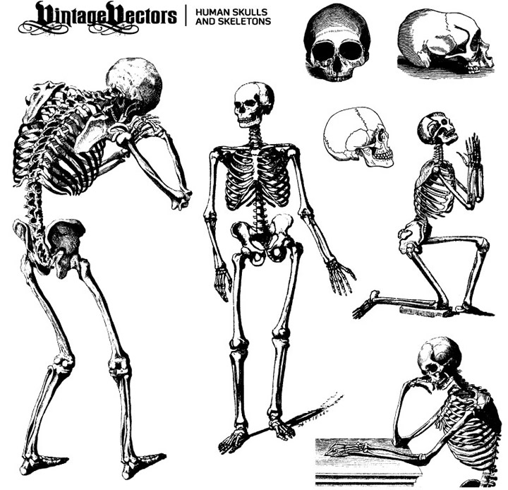 Human Skulls and Skeletons
