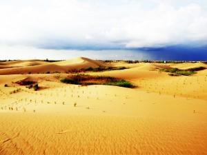 Desert Scenery 4
