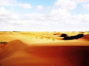 Desert Scenery 5