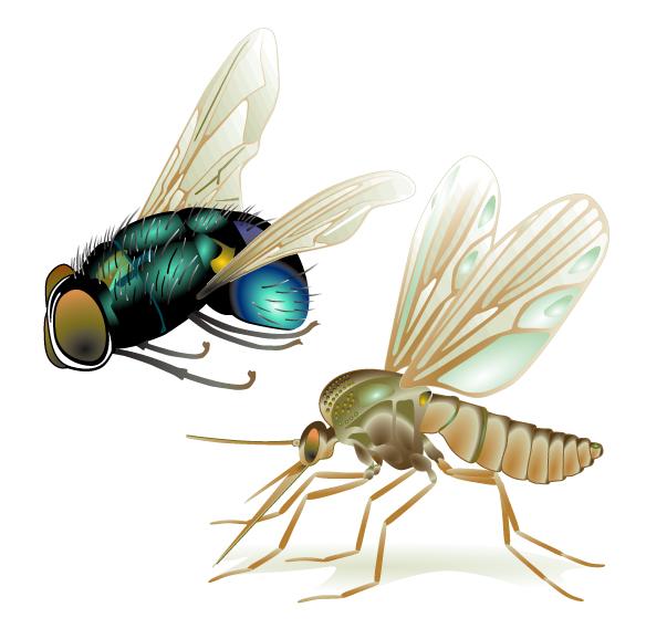 Flie Mosquito
