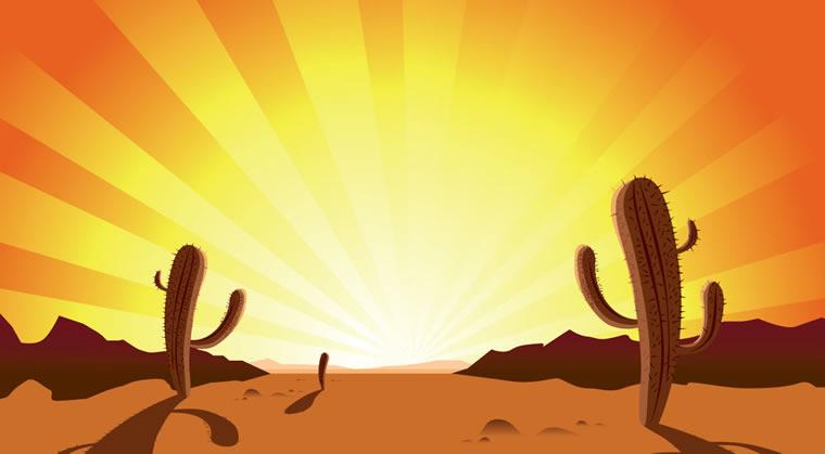 Sunset Desert Cactus