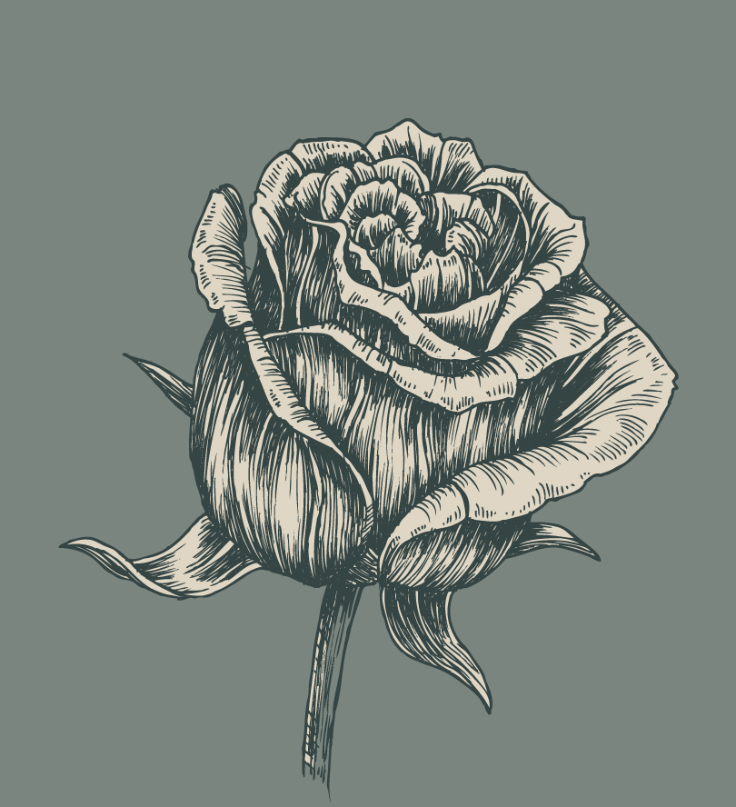 Hand Drawn Rose