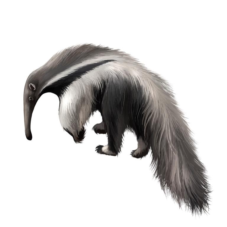 Wild Giant Anteater
