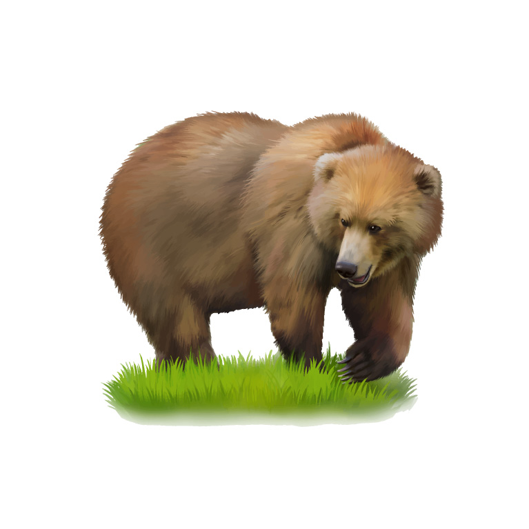 Wild Ursus Arctos