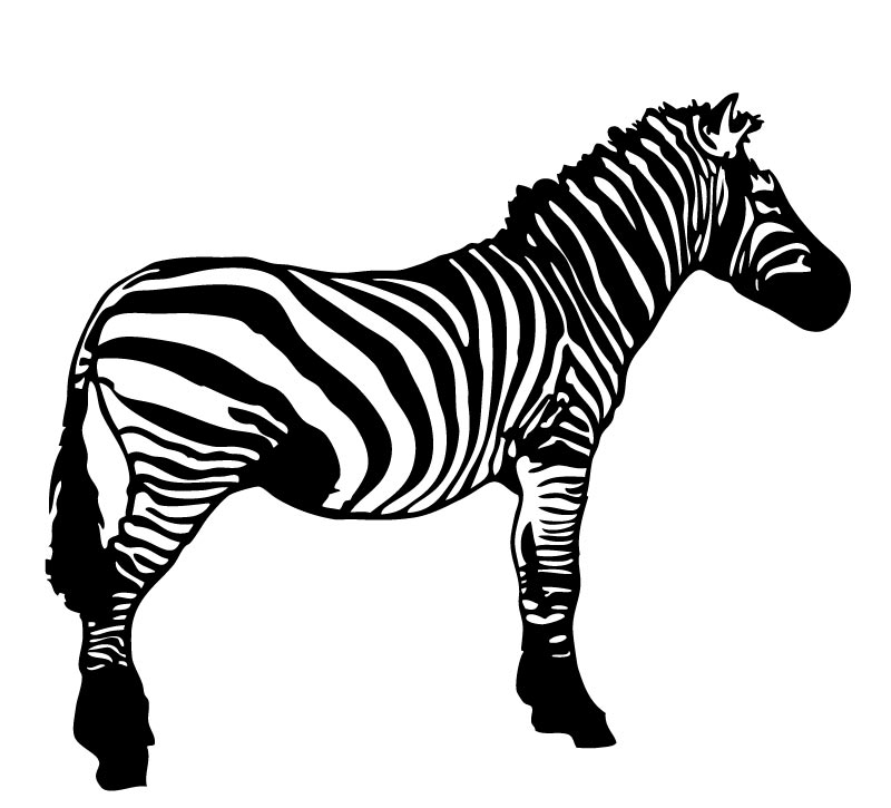 Black and White Zebra Vector