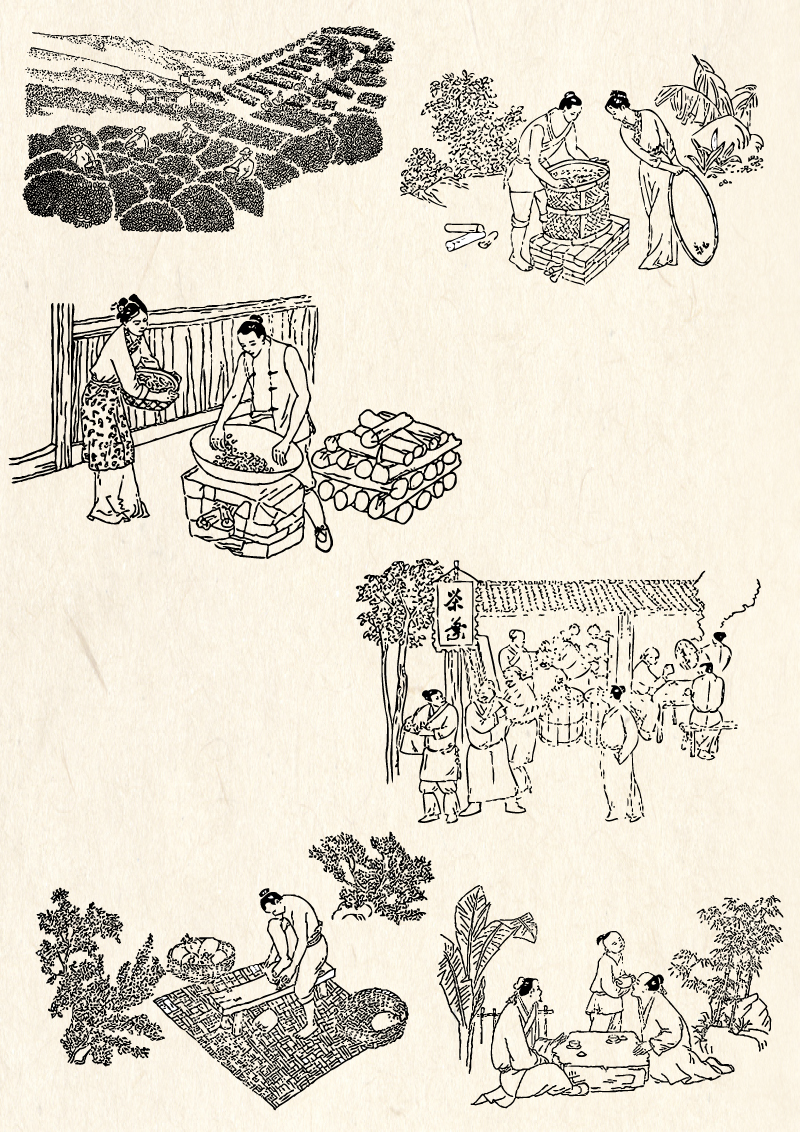 Line Drawing Ancient Tea Processing Vector