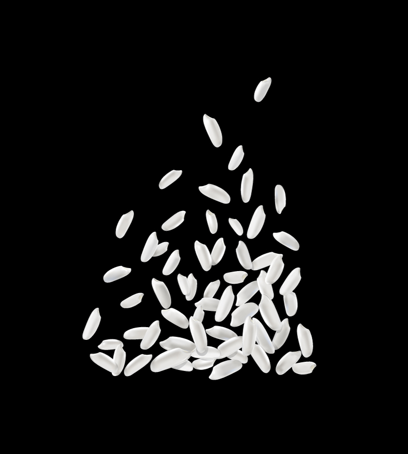 White Rice Design Vector
