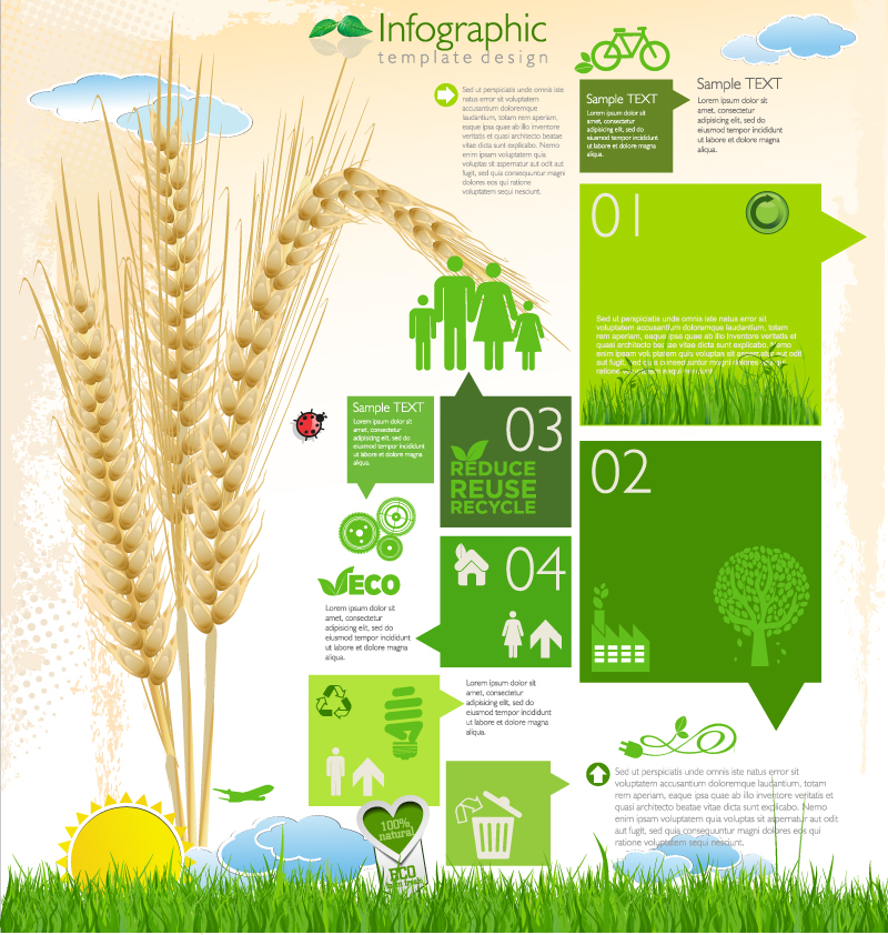 Infographic Green Wheat Vector