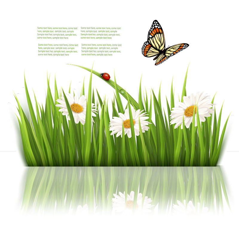 Beautiful Butterfly Flowers Background Vector