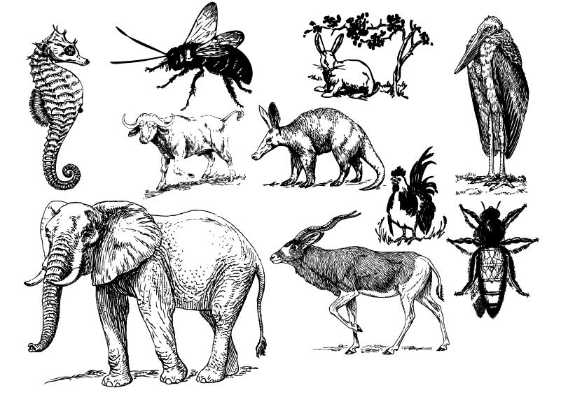 Wild Critters Vector