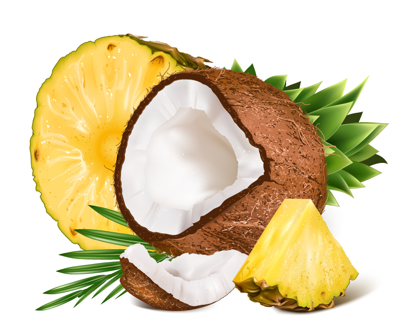 Coconut and Pineapple Vector