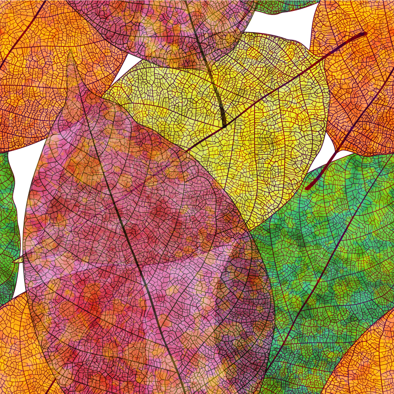 Autumn Color Leaves Card Vector