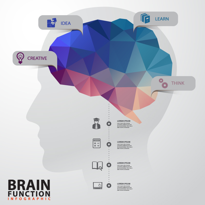 Brain Function Infographics Vector