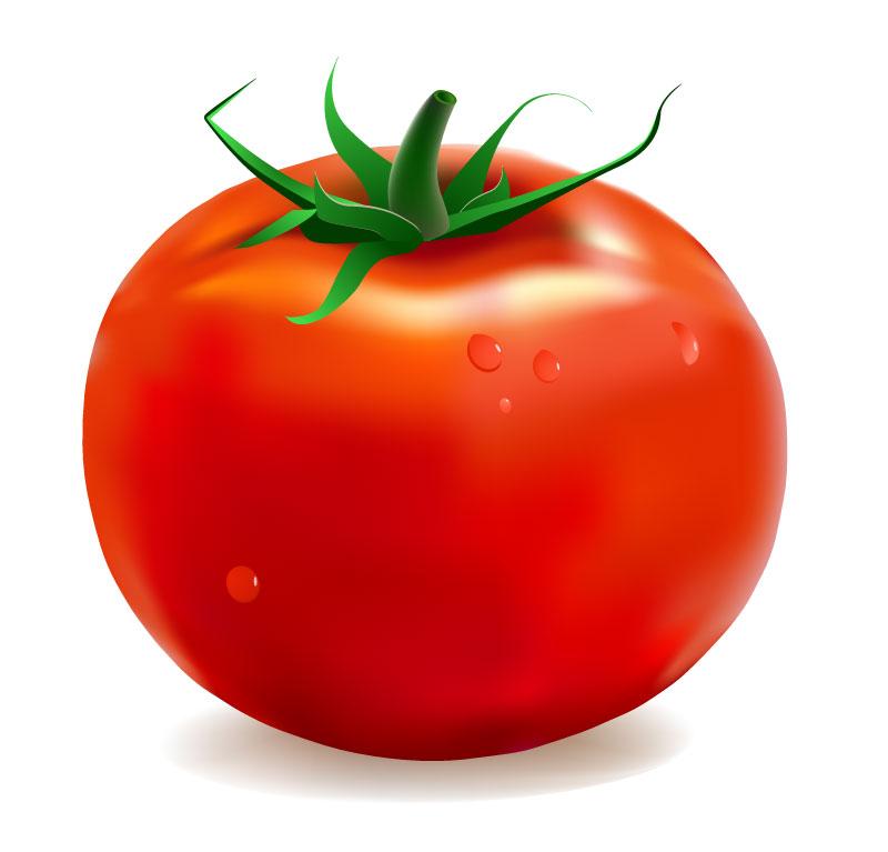 Free Tomato Vector