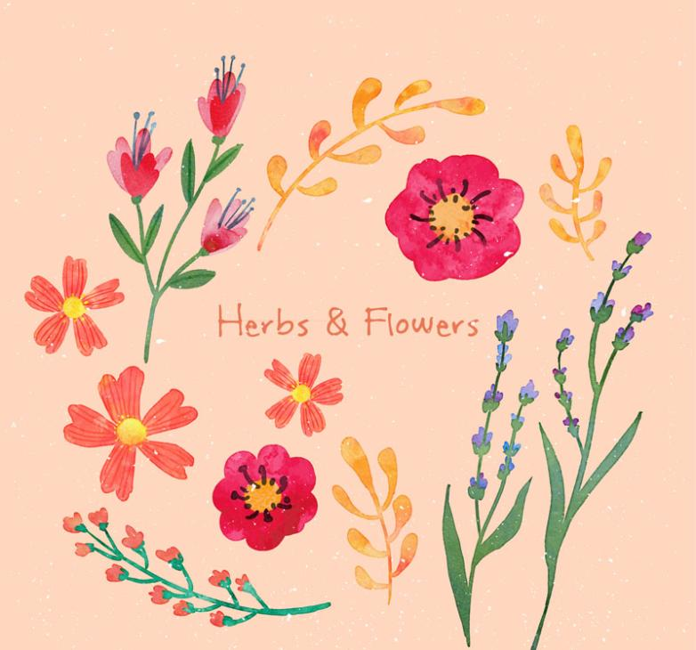 Vector 12 Hand-painted Flowers And Herbs