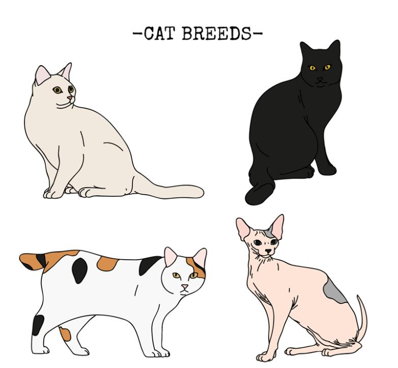 4 Lovely Cat Coloured Drawing Or Pattern Design Vector