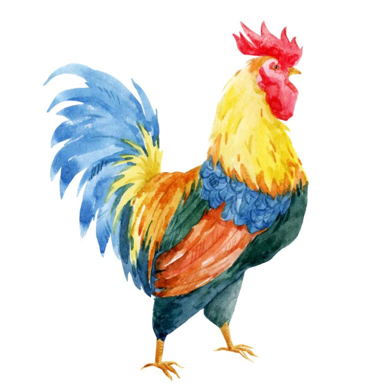 Water Cock Coloured Drawing Or Pattern Design Vector