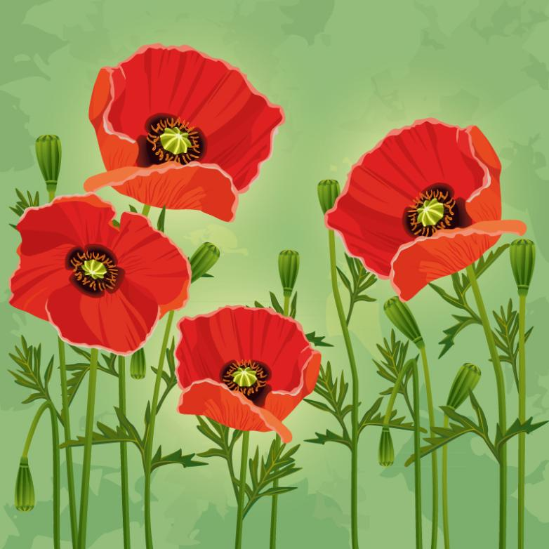 4 Red Poppies Vector