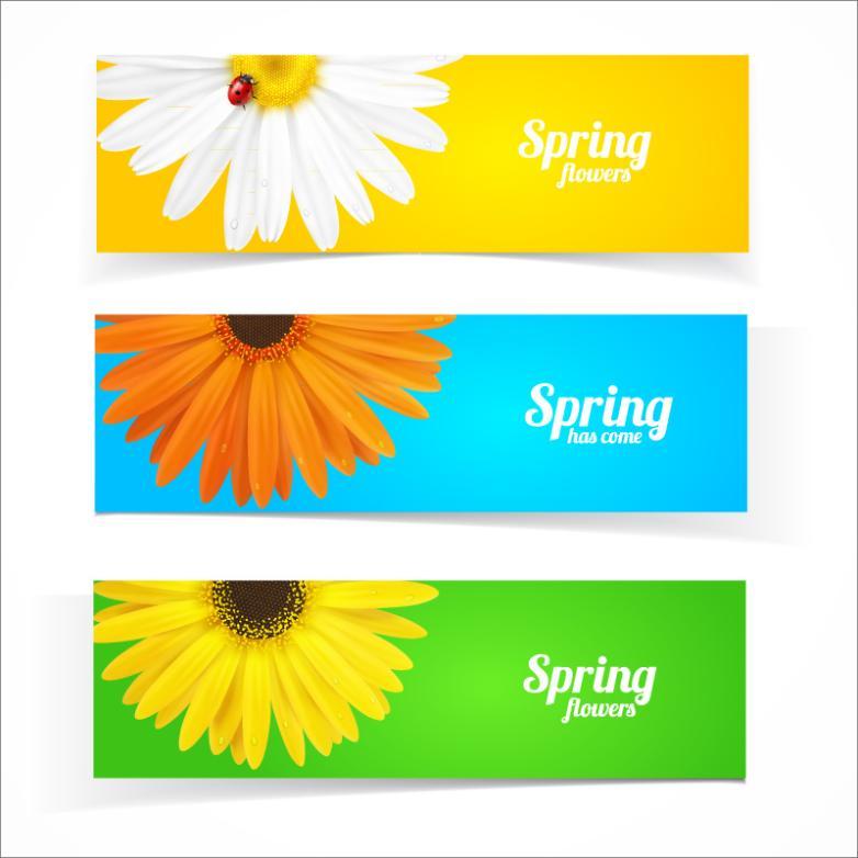 Three Spring Chrysanthemum Banner Vector