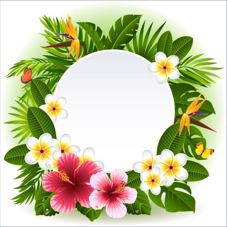 Tropical Frangipani Flower Decoration Label Vector