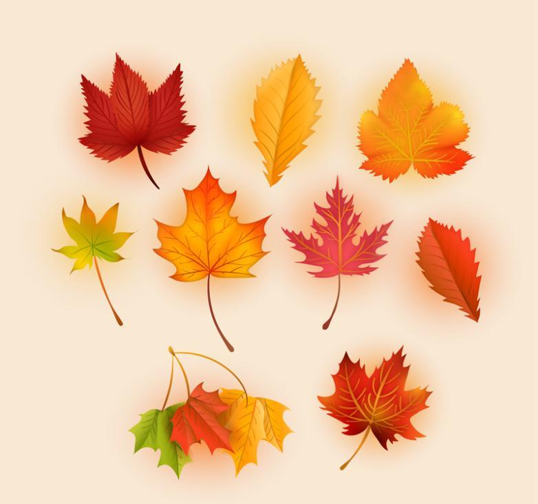 Nine New Fine Autumn Leaves Vector