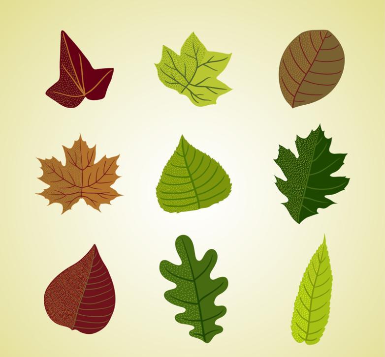Nine New Design Color Leaves Vector
