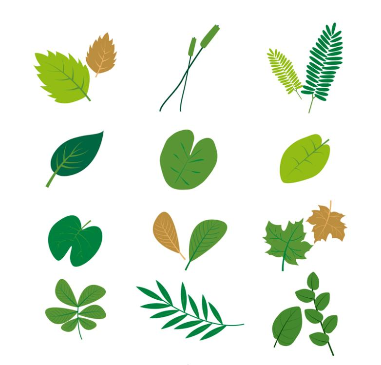 12 Design Green Leaves Vector