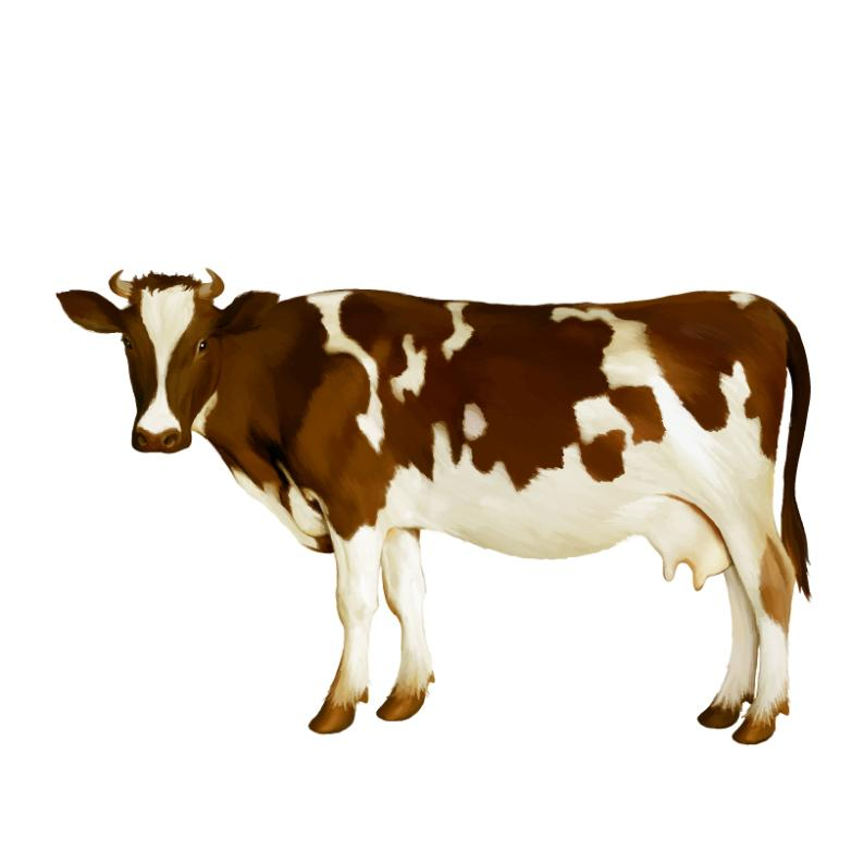 Watercolor Brown And White Cow Vector