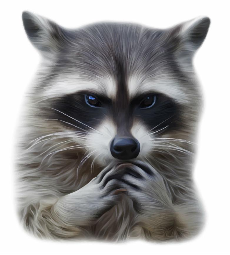 Clear Water Raccoon Coloured Drawing Or Pattern Vector