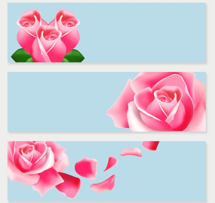 Three Pink Roses Banner Vector