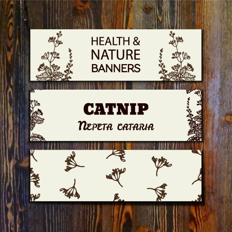 Three Hand-painted Cat Mint Banner Vector