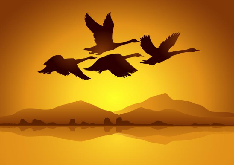 Flying Swan Silhouette In The Evening Vector