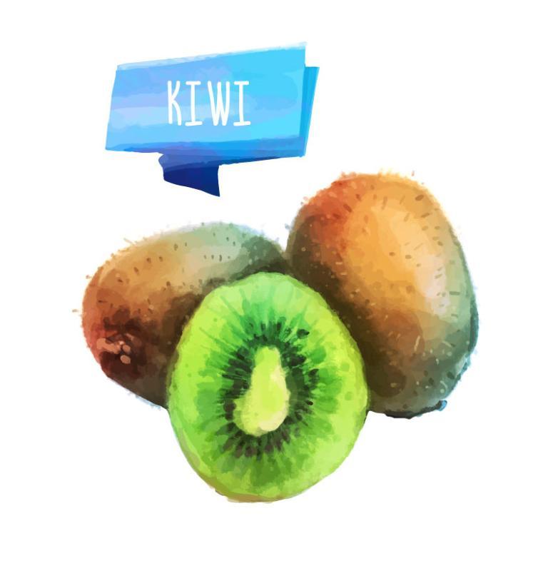 Watercolor Kiwi Vector