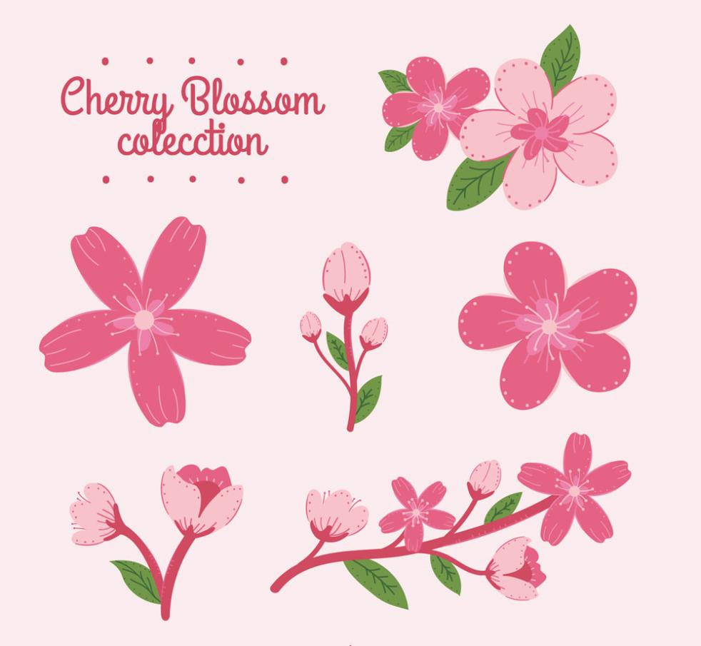 6 Pink Cherry Blossoms And Flowers Vector