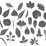 Leaf Icon Set 2019 Vector